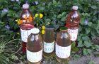 Priprava melisinega soka